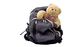 Teddy Bear in a backpack stock image