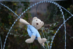 Teddy bear. On the barbed wire Stock Photography