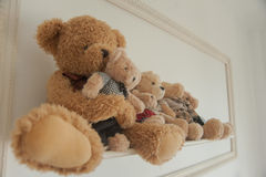 Teddy bear. Stock Photos