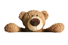 Teddy bear behind a white board Stock Photos