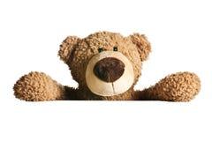 Teddy bear behind a white board Stock Photos