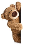 Teddy bear behind a white board Stock Image