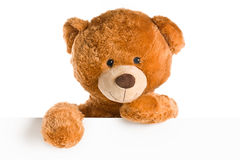 Teddy bear behind whiteboard Royalty Free Stock Photography