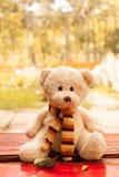 Teddy bear on a bench Stock Photo