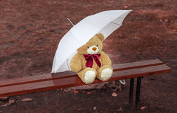 Teddy bear on the bench with an umbrella Stock Photo