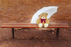 Teddy bear on the bench with an umbrella Stock Photography