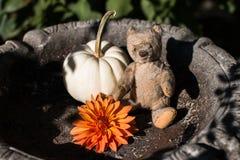 Teddy bear in bird bath with pumpkin and dahlia ready for Halloween stock images
