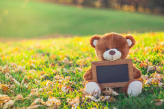 Teddy bear with black board sitting on grass field in autumn sea Stock Photography