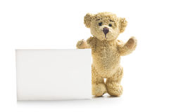 Teddy bear with blank board Stock Image