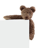 Teddy bear with blank note. Isolated on white background royalty free stock image