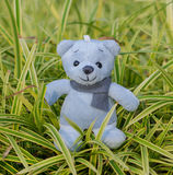 TEDDY BEAR blue color with scarf on ornamental plants Royalty Free Stock Images
