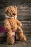 Teddy bear. Royalty Free Stock Photo