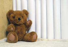Teddy bear on the bookshelf. Brown teddy bear, white roots of books, wooden shelf royalty free stock image