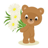 Teddy bear with a bouquet of flowers. Teddy bear holding a bouquet of white flowers. Festive vector cartoon illustration Royalty Free Stock Photo