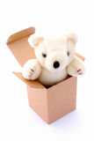 Teddy bear in box. A cute little teddy bear for kids coming out of a plain cardboard box. Image isolated on white studio background Royalty Free Stock Photography