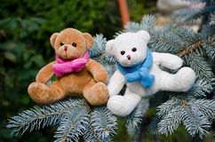 Teddy bear brothers Stock Photography