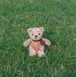 TEDDY BEAR brown color with scarf Royalty Free Stock Photography