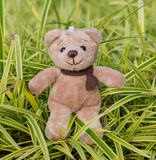 TEDDY BEAR brown color with scarf on ornamental plants Stock Photo