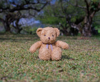 TEDDY BEAR brown color sitting on grass Royalty Free Stock Photography