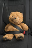 Teddy bear. Buckle with safety belt Royalty Free Stock Photo