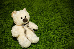 Teddy Bear on the carpet. Cute teddy bear with a bow sitting quietly on the carpet of green Royalty Free Stock Photography