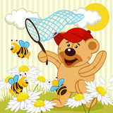 Teddy bear catching bee. Vector illustration Royalty Free Stock Photos