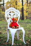 Teddy bear on a chair Stock Image