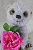 Teddy-bear Chupa with a dogrose flower Stock Photos