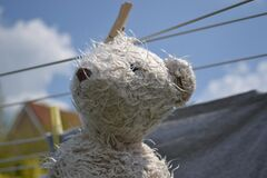 Teddy bear on clothesline Royalty Free Stock Photo