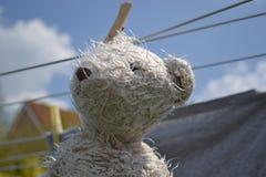 Teddy bear on clothesline royalty free stock photo