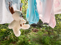 Teddy bear on the clothesline Stock Image