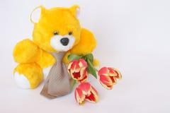 Teddy Bear com laço, tulipa floresce - as fotos conservadas em estoque Imagens de Stock