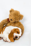 Teddy bear comforts sleeping puppy Stock Photo