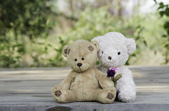 Teddy bear couple Stock Photo