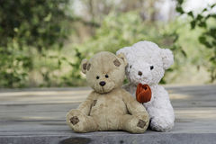 Teddy bear couple Stock Image