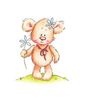 A teddy bear with daisy. Cute teddy bear with daisy on white background Royalty Free Stock Image