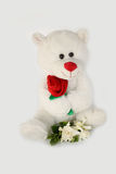 Teddy bear doll Stock Photos