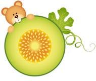 Teddy bear eating cantaloupe melon slice Stock Images