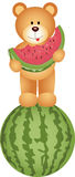 Teddy Bear Eating Watermelon Royaltyfria Bilder