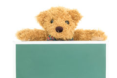Teddy bear with empty green board Stock Image