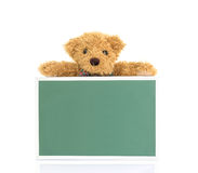 Teddy bear with empty green board Royalty Free Stock Photo