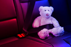 Teddy bear fastened in the back seat Stock Photography