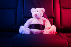 Teddy bear fastened in the back seat Stock Image