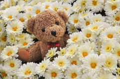 Teddy bear in flowers. Little teddy bear in lovely flowers background Stock Photography