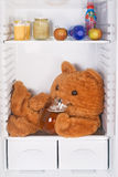Teddy bear in the fridge Stock Photos