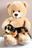 Teddy bear with friend Royalty Free Stock Photography