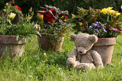 Teddy Bear in garden Stock Images