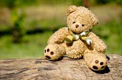 Teddy bear in the garden Stock Images