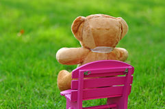 Teddy Bear in the Garden Royalty Free Stock Image
