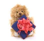 Teddy bear with gift box. Isolated on white Royalty Free Stock Image